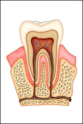 South Pasadena Root Canal